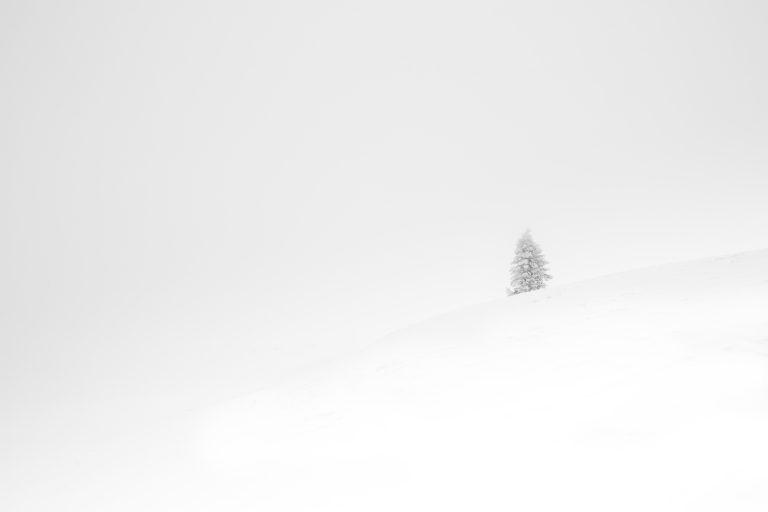 Lone Tree - Poland