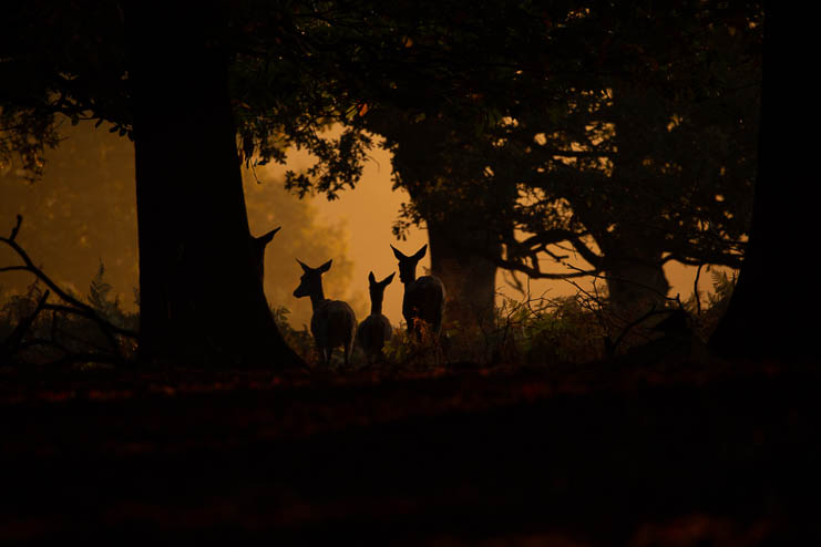 Three deer together in a Landscape Photograph